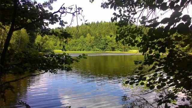 Jedlovské rybníky